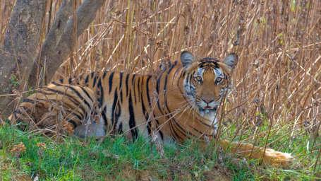 Kadkani Riverside Resort, Coorg Coorg Nagarhole National Park